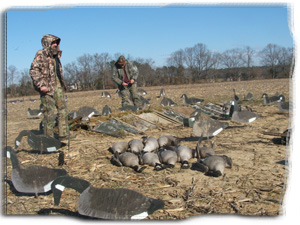 Maryland Goose Hunting, Duck Hunting, Deer Hunting, Professional Guide Service
